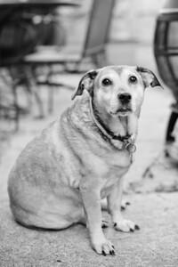 Stanley_Pets-014