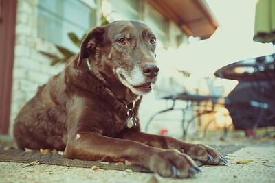 Stanley_Pets-015