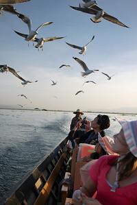 We feed seagulls chasing our boat on Inle Lake, Burma (Myanmar).