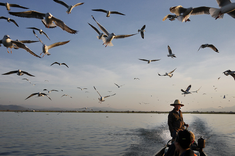 Seagulls chase our boat on Inle Lake, Burma (Myanmar).