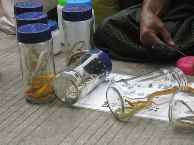 A man on the streets was selling snakes in jars! In Yangon, Myanmar (Burma)