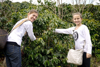 Ana and I pick coffee cherries on the 2011 Akha Ama coffee journey to Maejantai village outside of Chiang Rai, Thailand.