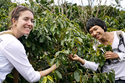 Lee and Eva pick coffee!