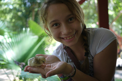 Holding a baby chick that was just born under one of the statues at the temple :)