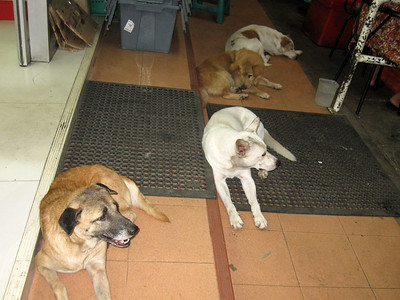 Stray dogs in front if 7-11.