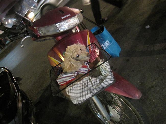 dog in motorbike