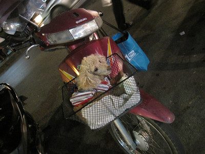 A tiny dog in a basket that was connected to a motor bike.