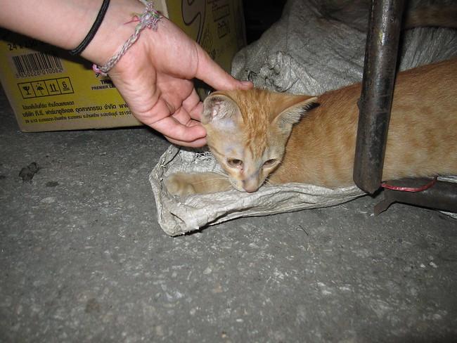 petting tiny cat