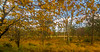 Høst i Rogaland Arboret