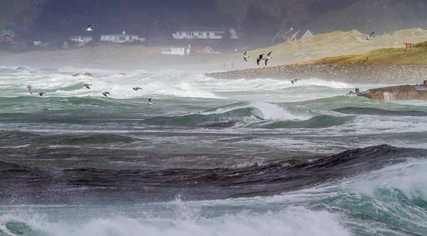 Storm med fokk på Hellestø-stranden, Sola/ Klepp kommuner.
