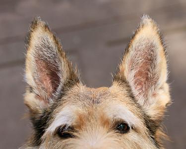 new ears 1