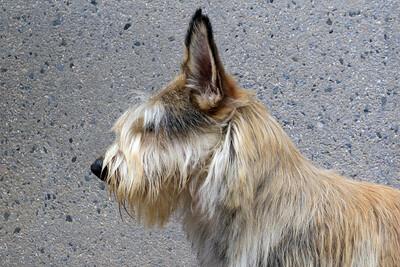 Profile Head 1