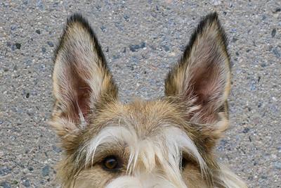 Both ears 1
