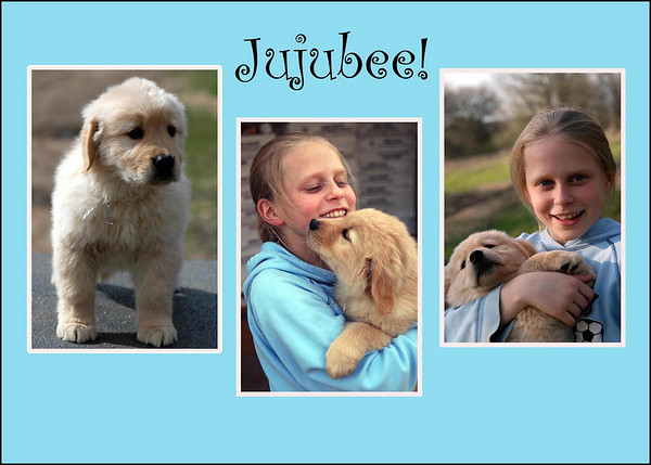 Jujubee Puppies