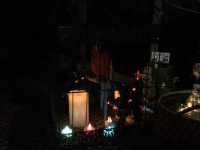 Parrot in cage on veranda