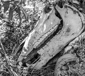 Bones of the Southwest