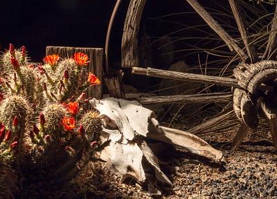 Skull and Cactus