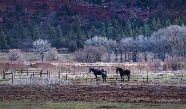 Cold Morning Pasture Mates