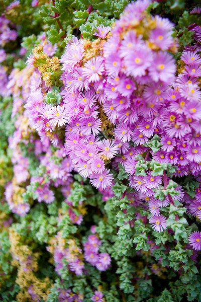 Vegetation in garden of Tickle Pink Inn
