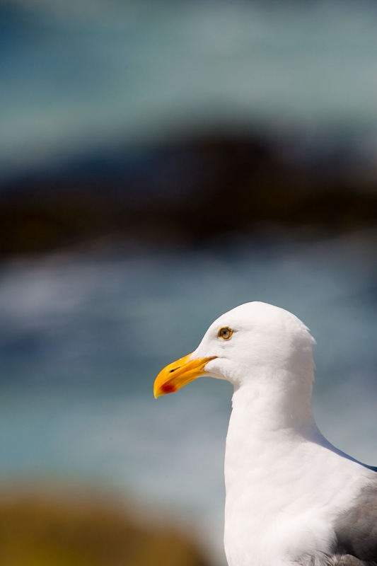 Seagull...by the sea