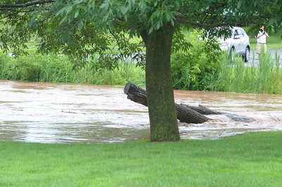 John Brewer - Oneida Daily Dispatch A tree trunk is caught in flood waters at Thruber Park in Sherrill on Saturday, July 1, 2017.