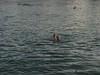 015 Rhein-Swimming with Josh