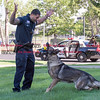 072816  Wesley Bunnell | Staff<br /> <br /> New Britain Police Ofc. Ray Ouellette rewards Pup after successfully finding evidence in the grass during a demonstration.  Ofc. Ouellette and Pup recently placed second in the state's police canine competition.