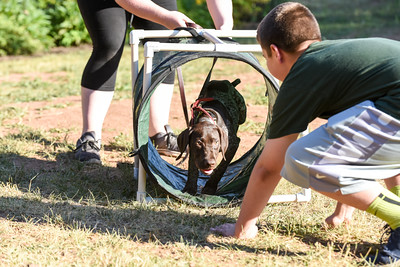 063016  Wesley Bunnell | Staff  Kindergarten Puppy Training Class was held on June 30 at Pistol Creek Golf Course in Berlin.  Tyler Degroff of Berlin encourages 3 1/2 month old Sadie , a German Short Hair Pointer, to complete the obstacle course.