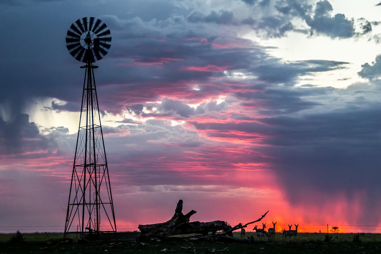 Antelope Sunset