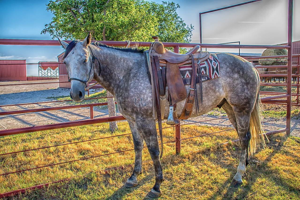 Horse, 6666 Ranch