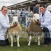 NCC Interbreed Pairs Reserve Champions