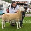 First Prize Aged Ewe
