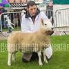 First Prize Ewe Lamb