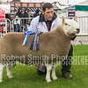 Reserve Champion and Champion Male