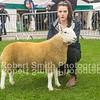 First Prize Ram Lamb