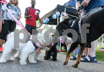 071917  Wesley Bunnell | Staff  The second annual Pets-A-Palooza was held at Walnut Hill Park on on Wednesday evening.  Shih Tzu's Bonnie, L, Ben and Shih-poo Bossco say hello to Shepard-Lab mix Ditka.