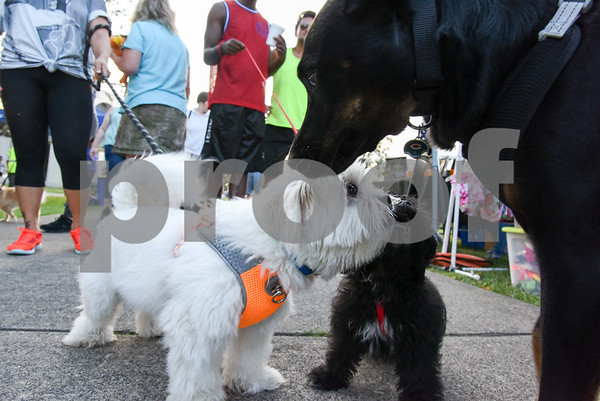 071917 Wesley Bunnell | Staff The second annual Pets-A-Palooza was held at Walnut Hill Park on on Wednesday evening. Shih Tzu Ben, L , and Shih-poo Bossco say hello to Shepard-Lab mix Ditka.