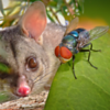 """""""Louie the Fly Plays Possum While Baby Hush Eyes Lunch."""""""
