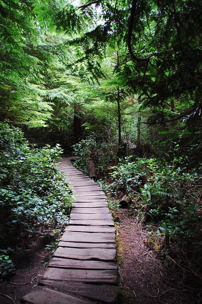 We wandered northwest to Cape Flattery, the farthest northwest you can get in the contiguous US.  The road ends a mile from the ocean but you can walk in on this hobbit-esque narrow wooden trail.