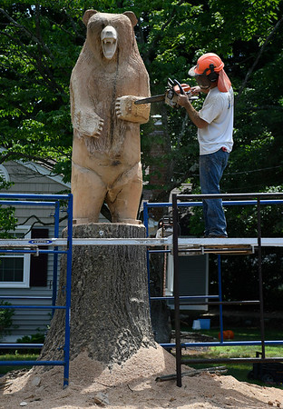 7/5/2018 Mike Orazzi | Staff Jared Welcome carves a giant bear in a white oak tree along East Street in Southington Thursday afternoon.