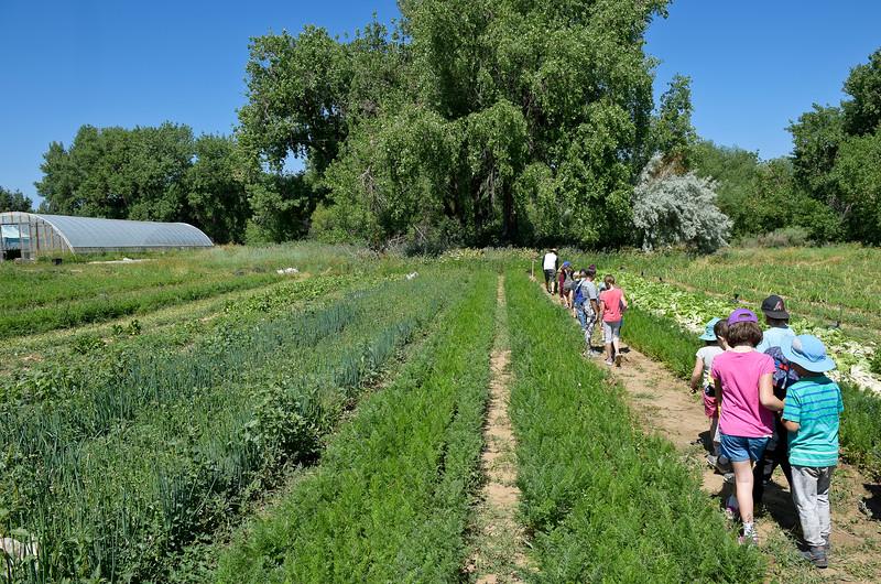 Ollin Farms Summer Camp