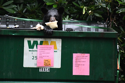 """I love the fact that you can read the """"bears are out and hungry sign."""" Truth!"""