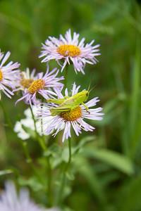 Hopper flower