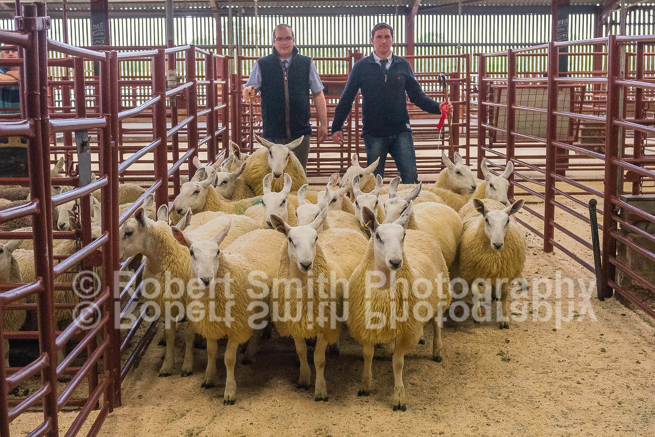 Photo 1 - Ewe Lambs1st prize  – P W Hedley, Swinside Townfoot - sold for £182 to Messrs Moralee, Durham