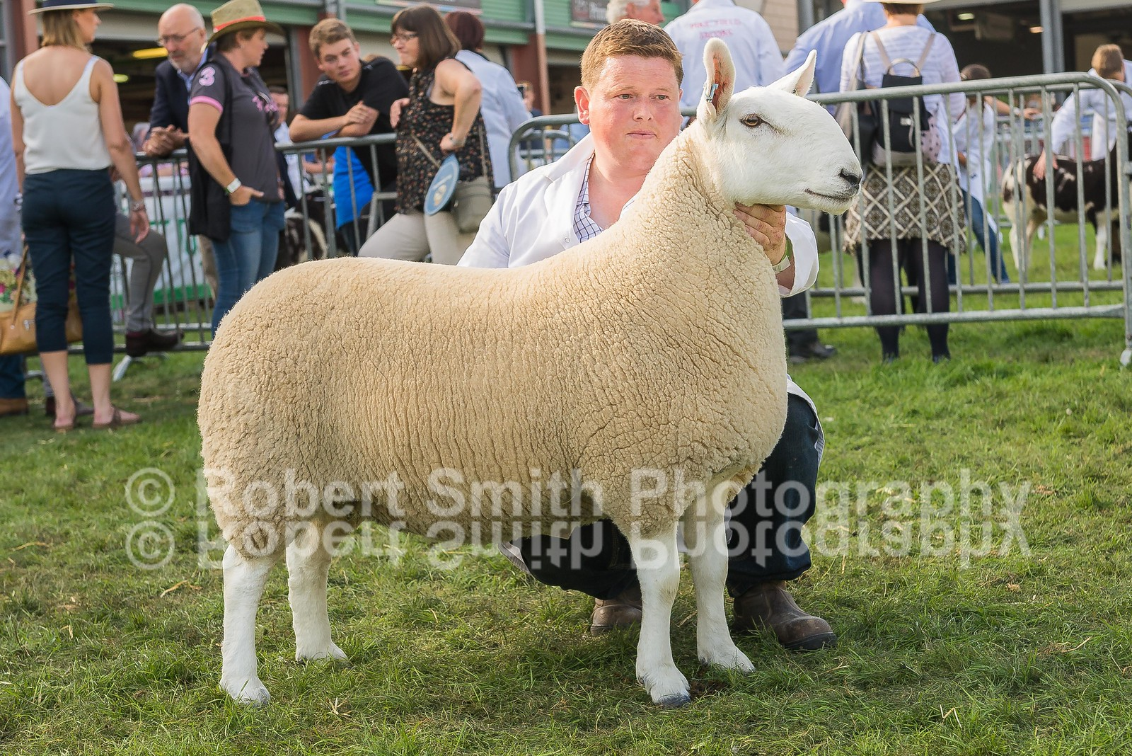 Overall Champion First prize shearling ewe