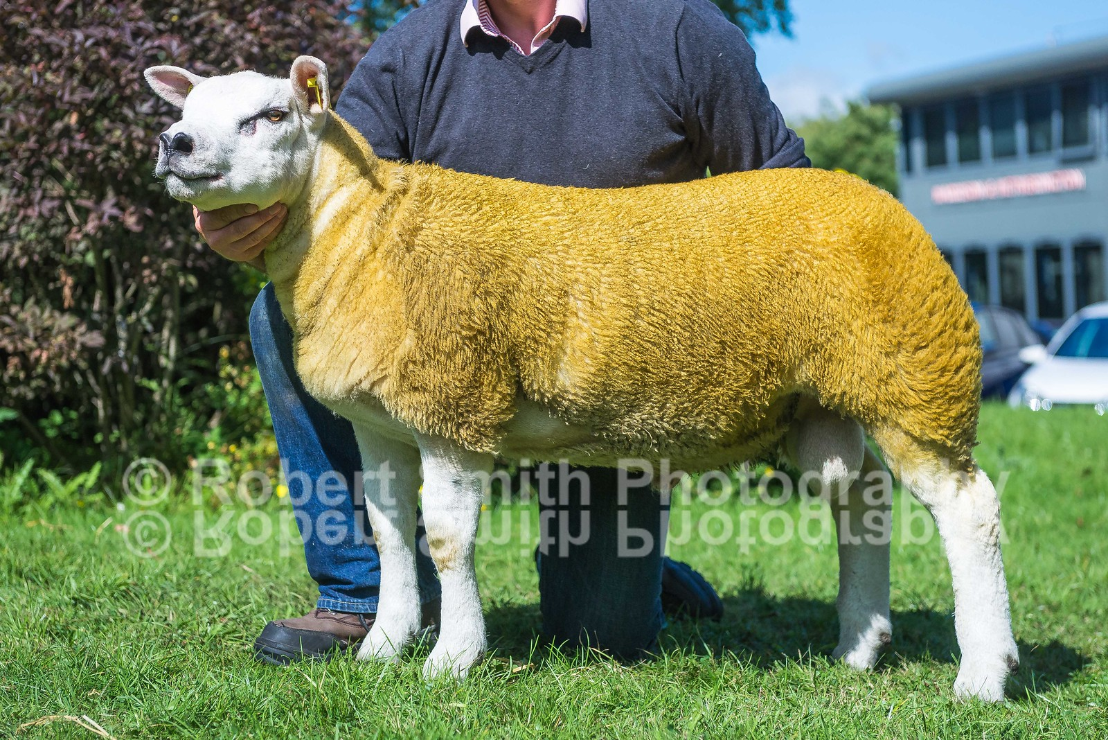 Lot 539 Ram Lamb sold for 40,000 gns