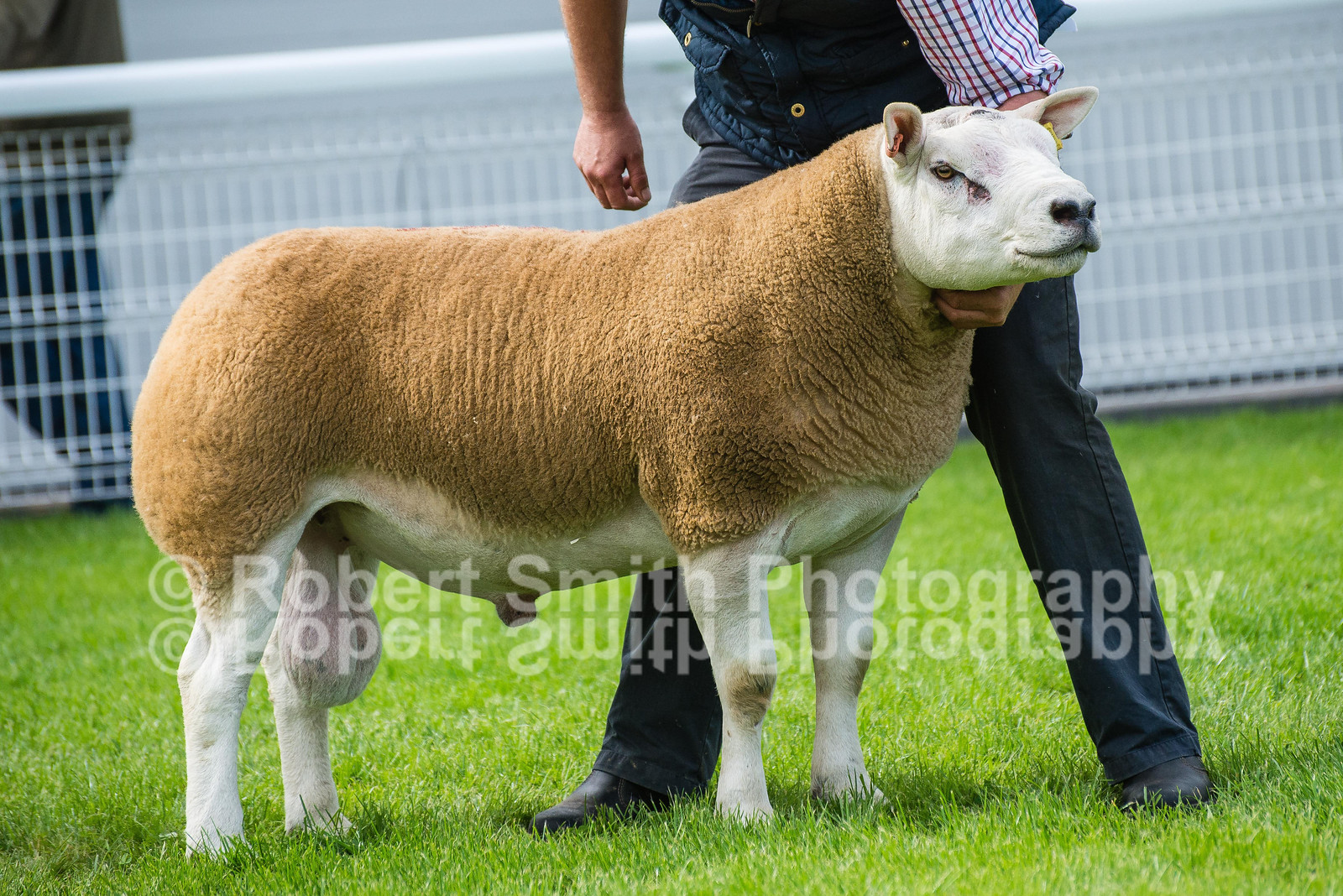 1 - lot 2887 Texel sold for 8600 gns