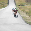 2016 L.L. Bean U.S. Nordic Combined Championships at Soldier Hollow, Midway, UT<br /> Rollerski 10K<br /> Photo: U.S. Ski Team