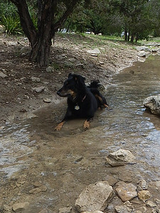 Nacho P taking a break in the creek