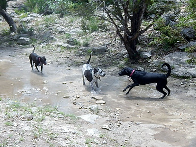 Schatzi L greets Churchill and Pi K in the creek